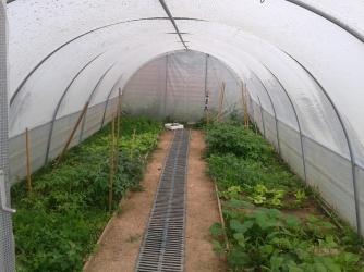 Serre du jardin après le passage des jardiniers en herbe