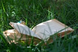 le livre et l'herbe